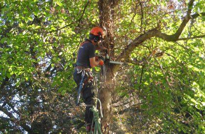 ( Mapje onderhoud) Verwijderen en snoeien bomen (1)_0